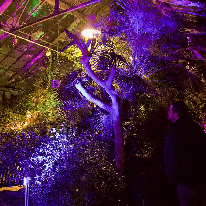 Lit Greenhouse Interior At RBG After Dark